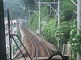 060617 箱根湯本付近のアジサイ
