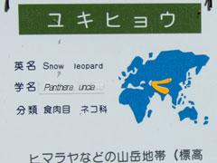 080727 Snow Leopard 円山動物園