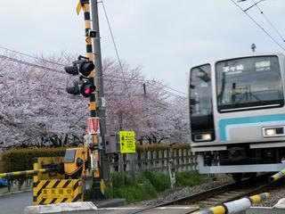 20110410 [Rail]相模線:倉見の桜