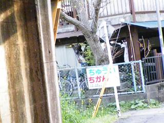 20110416 [踏切][Rail]きしゃにちゅうい:京王線北野6号踏切